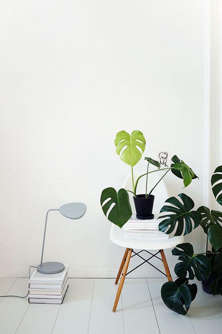 Oltre 25 fantastiche idee su piante da appartamento su for Piante e fiori da appartamento