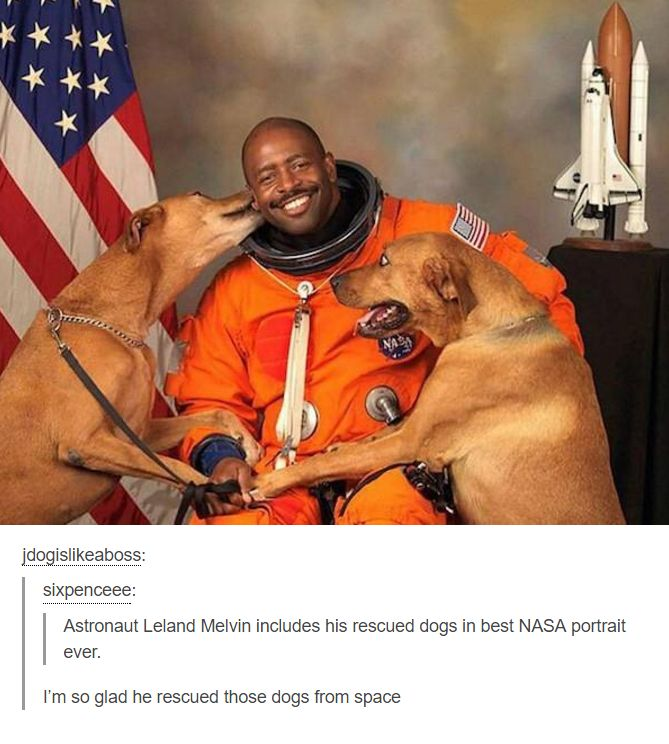 Saving dogs from space #imgur