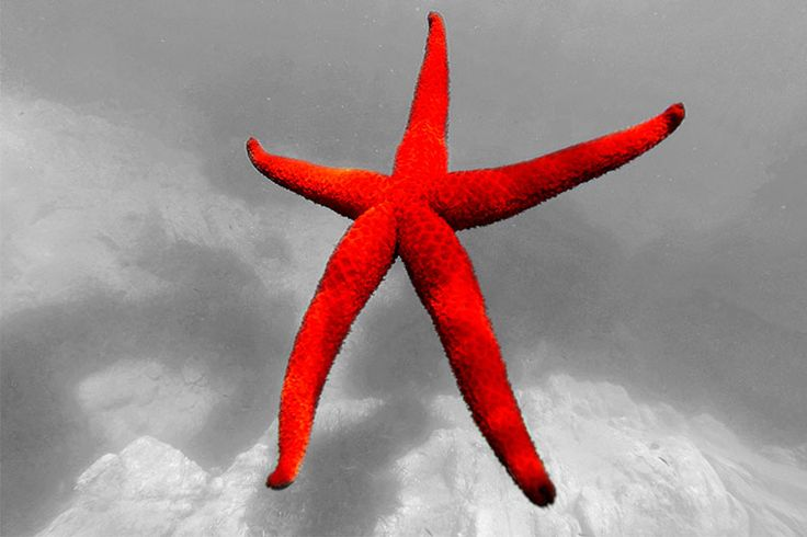 Redstaris an awesome high qualityphoto canvas prints@300 dpi to furnish your interiors in an original way.