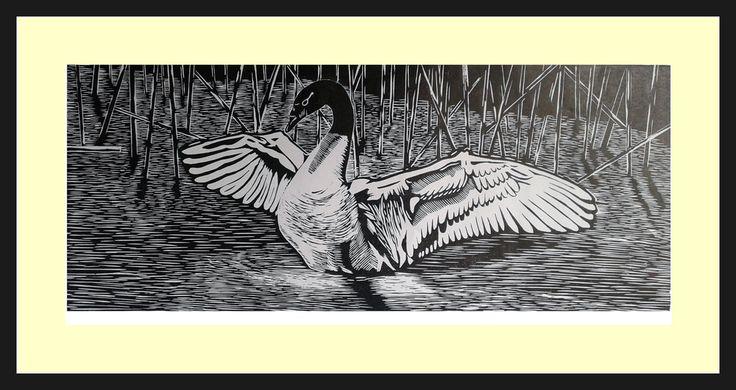 Cisne de Cuello Negro, Xilografía, $80 000