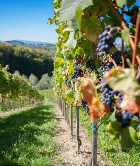 Slovenië is een echt wijnland met wijnregio's in alle windstreken. Wij vertellen je de vier beste manieren om Sloveense wijn te ontdekken. #Sloveensebeleven #mijnslovenie