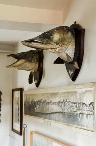 fish mounts!!! home decor & furniture Pinterest Fish