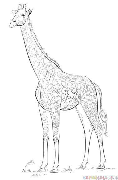25  best giraffe drawing ideas on pinterest