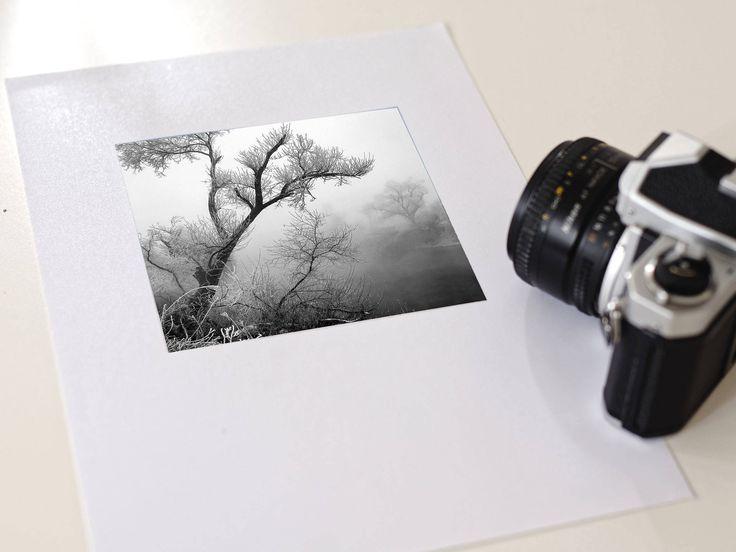 Original photography, home decor, fine art, gift, mini, Transylvania, winter, frozen  tree 5x5 plus white border, limited edition of 20