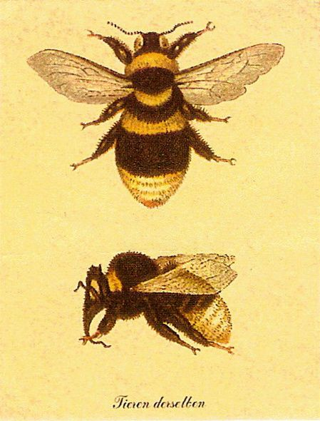 Napoleonic Bee. Symbol of immortality and resurrection. They were considered as the oldest emblem of the sovereigns of France.