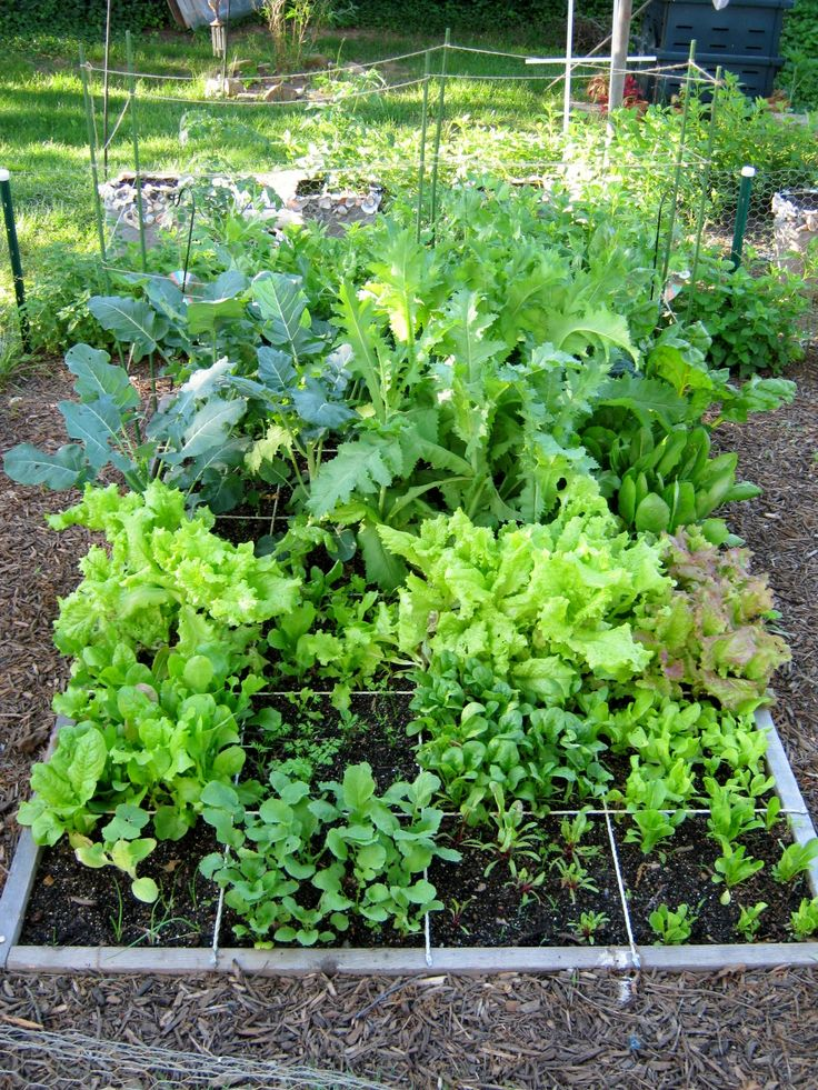 736 best images about a vegetable garden on pinterest gardens raised beds and raised garden - Square meter vegetable garden ...