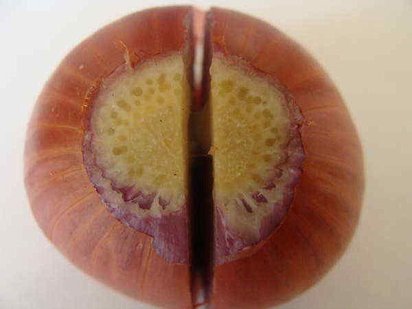 Как из одной луковицы вырастить несколько Семейный лук выращиваются без перекопки почвы.Перед посадкой обрезаем сухую шейку и подрезаем донце до свежих корней. Дело в том, что донце семейного лука закрыто одревесневшей «пяткой». Если её оставить, то корней на луковице появляется мало, развитие гнезда задерживается, и урожай может снизиться вдвое.Если нужно режем луковички вдоль луковицы. Тут есть важный момент. Корешки у семейного лука на донце размещены не равномерно.