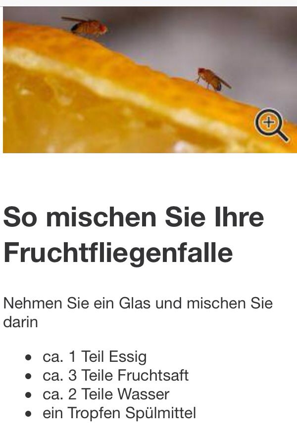 Fruchtfliegenfalle