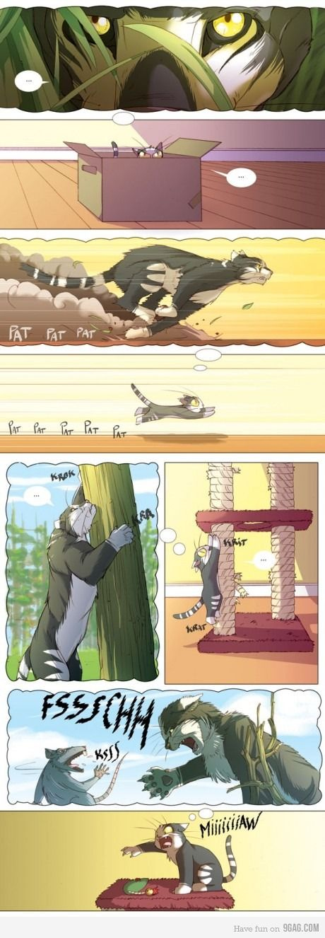 La vida de un gato!!  A cat's life!!