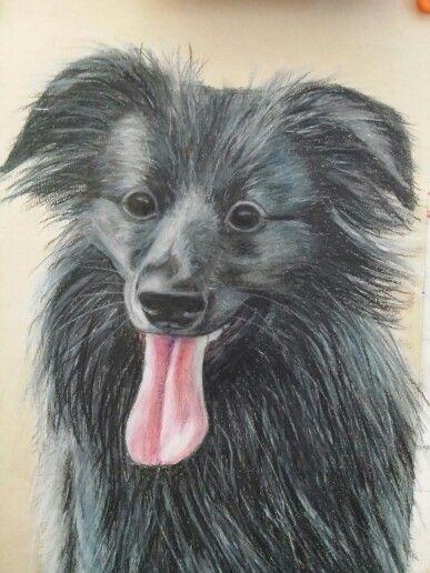 Super agility doggie. ... Polychromo pencil drawing