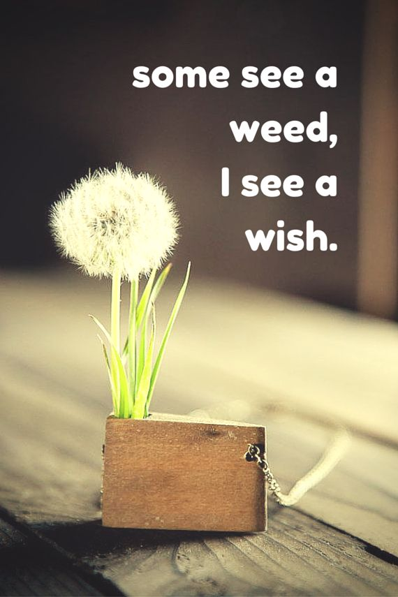 some see a weed,I see a wish. Click on this image to see the biggest selection of life tips and positive quotes!
