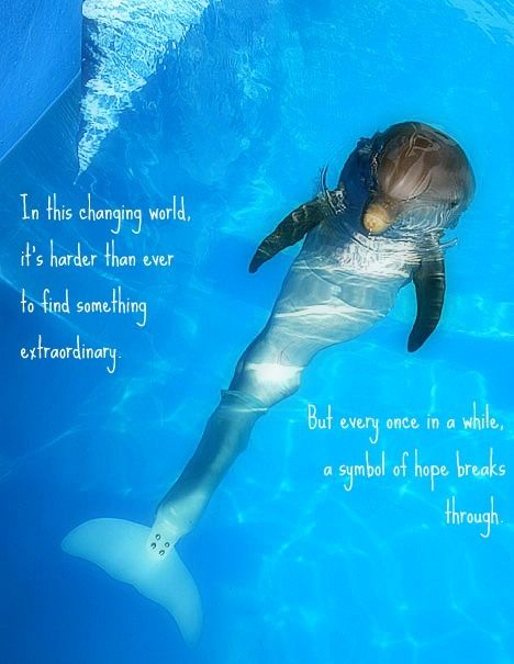 17 Best images about Dolphins on Pinterest | Swim, Cancun ...