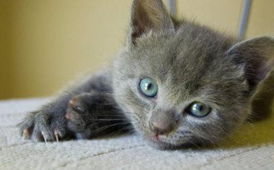 why are kitties so cute: Kitty Cats, Animals, Sweet Baby, Fluffy Kittens, Beautiful Eyes, Bby Kitten, Kitties