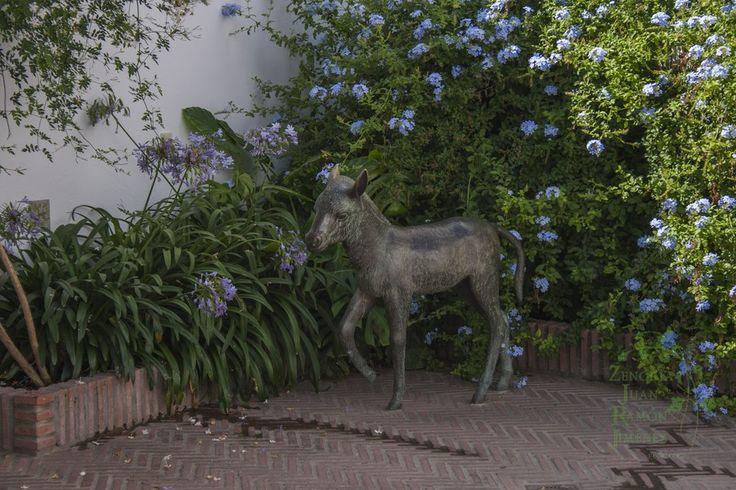 Platero en el patio de la casa de Juan Ramón en Moguer