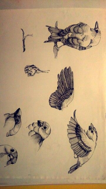My sparrows scketches