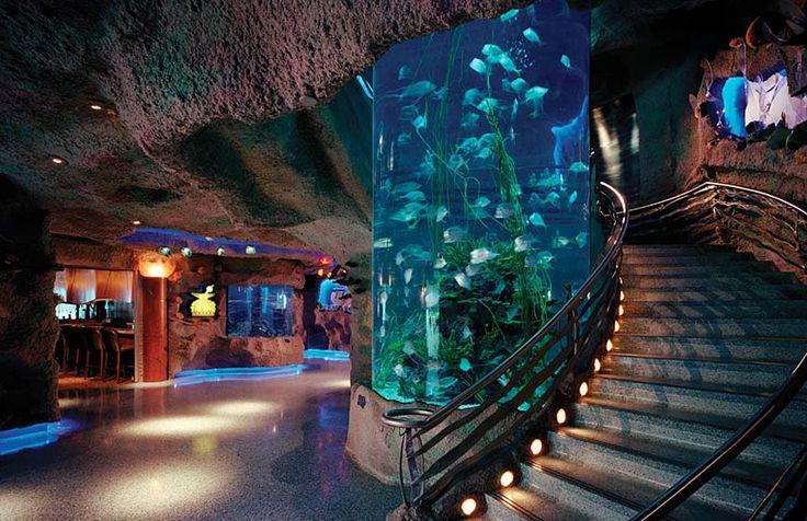 17 Best Images About Aquarium Mania On Pinterest