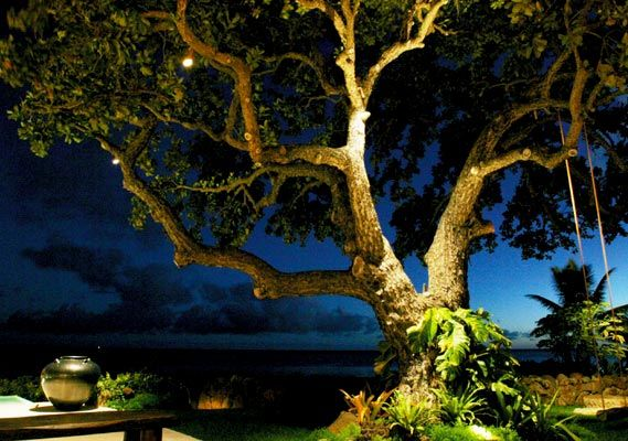Low Voltage Landscape Lighting For Trees : Landsape lighting directional landscape