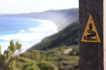 The Bibbulmun Track winds along the coastline past the Albany Wind Farm along the Torndirrup Peninsula. There are many curcular walks from the carpark which take you across wooden walkways and paved trails through this magnificent ecologically friendly solution to our carbon footprint.