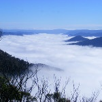 On Our Green Gully walk, a view of Kunderang Brook shrouded in mist in the Oxley Wild Rivers National Park - via @Bagovineyards