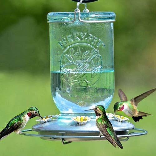Mason jar style hummingbird feeders are not only super cute but they are very easy to fill and clean, which is really important to be sure the sugar water is fresh and clean for the hummers. #sponsored