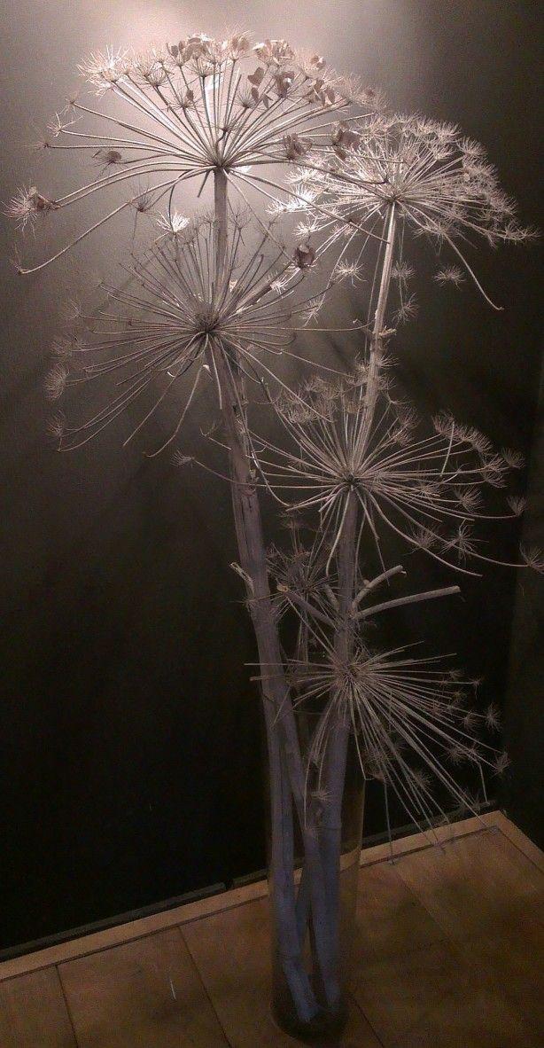 Prachtig cadeautje van de natuur: uitgebloeide berenklauw. Wit gespoten een mooie blikvanger voor bijna niets!