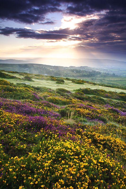 Debashis Bandyopadhya, A Summer Sunrise, Hay Tor, Dartmoor National Park, UK