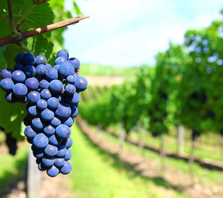 Visita a #Fiesole l'Azienda Agricola Poggio La Noce, un'impresa a gestione familiare che dedica la massima attenzione ai dettagli nella produzione di vino e di olio. http://bit.ly/1Fxw1rf  Poggio La Noce Agricultural Company: the attention to detail in the production of wine and oil in #Fiesole. http://bit.ly/1NXPDG6