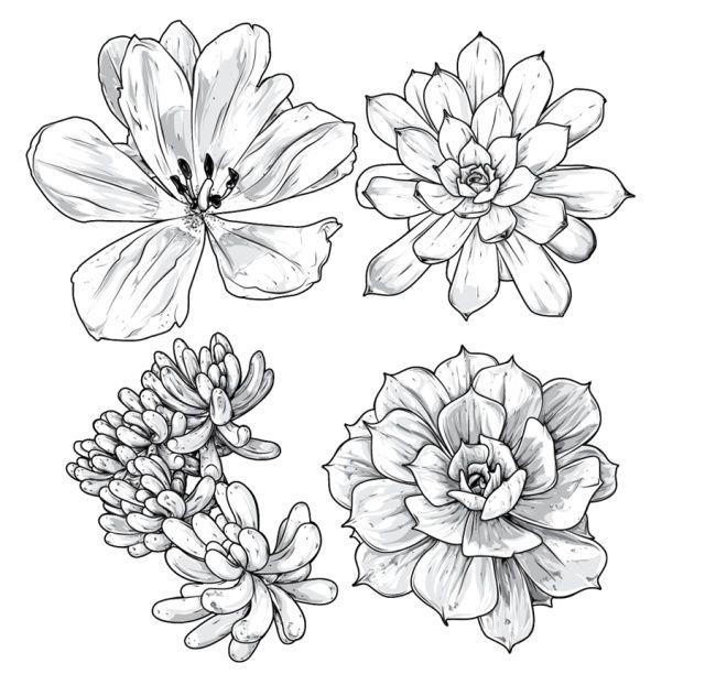 рисунок цветки на бумаге простым карандашом оперной