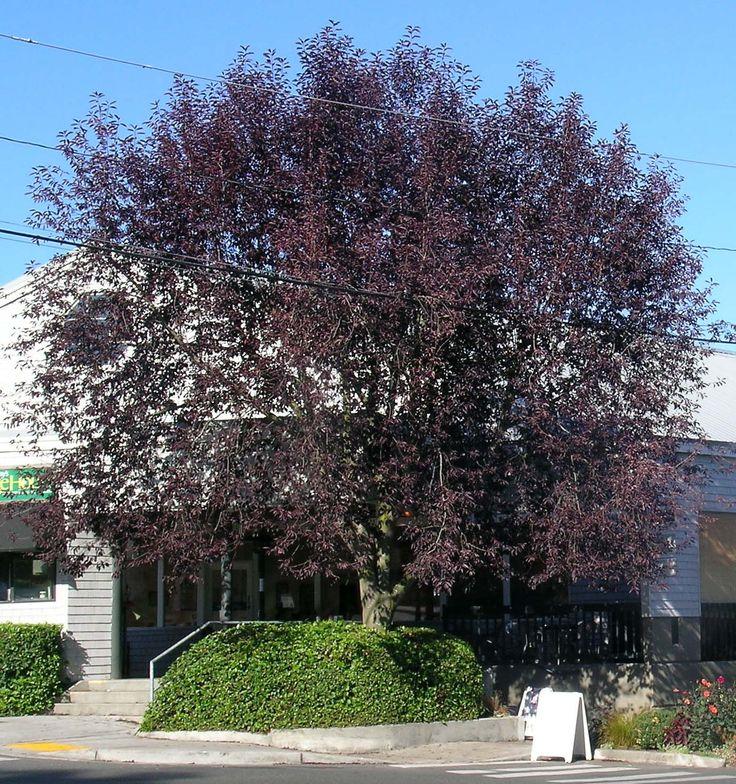 Mature tree nursery ontario right! seems