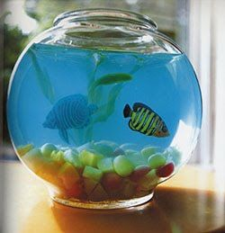 Make an edible jello aquarium!  So epically awesome! OOH  you could do a little snake terrarium using nutrigrain and lolly vipers!