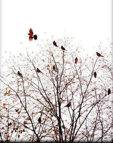 Flight Red Fine Art Birds Home Decor Birds Woodland by SevenTen, $25.00