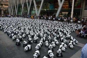 1600 Panda dünya turu bu sefer de Tayland'da.. Detaylar ajanimo.com'da.. #ajanimo #ajanbrian #hayvan #animal #dünya #panda