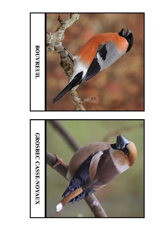 Imagier des oiseaux de chez nous - Page 8