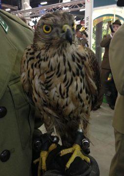 Targi LAS-EXPO rozwinęły skrzydła  Szlachetne ptaki ozdobą stoiska Lasów Państwowych