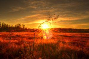 Scandinavian autumn by Floreina-Photography #tree #sunset #swamp #landscape #photography #sky #view #national park #lovely #beautiful #gorgeous #finland #scandinavia #suomi #puu #aurinko #auringonlasku #suo