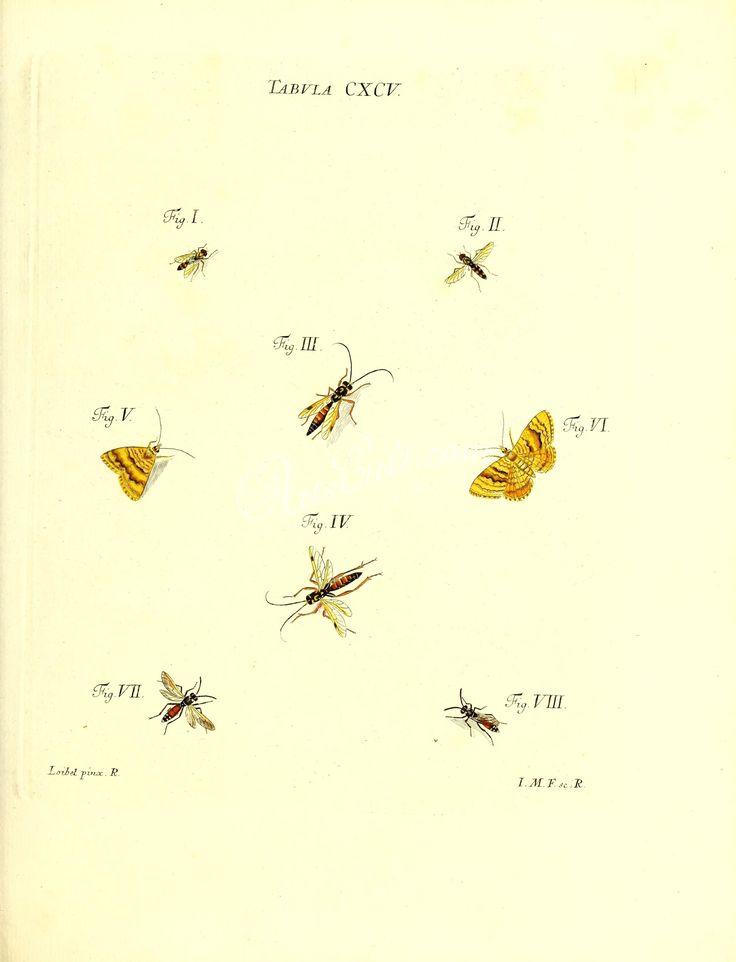 trichodes, tillus, lymexylon, anobium, ptinus, gibbium, blaps, boletophagus, tetratoma, diaperis, hypophloeus, hallomenus, melandria, pytho, tenebrio, lagria, ptilinus      ...