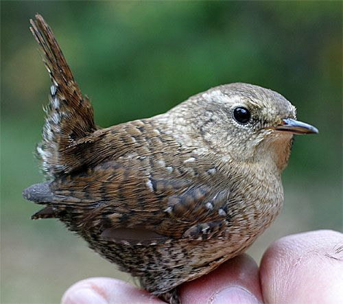 We finally have wrens living in our wren box. So cute!