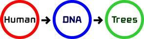 Biopresence. Human DNA Trees.
