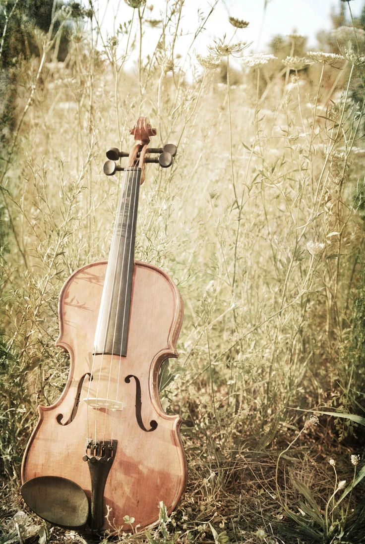 Violin Fiddle Photography Print