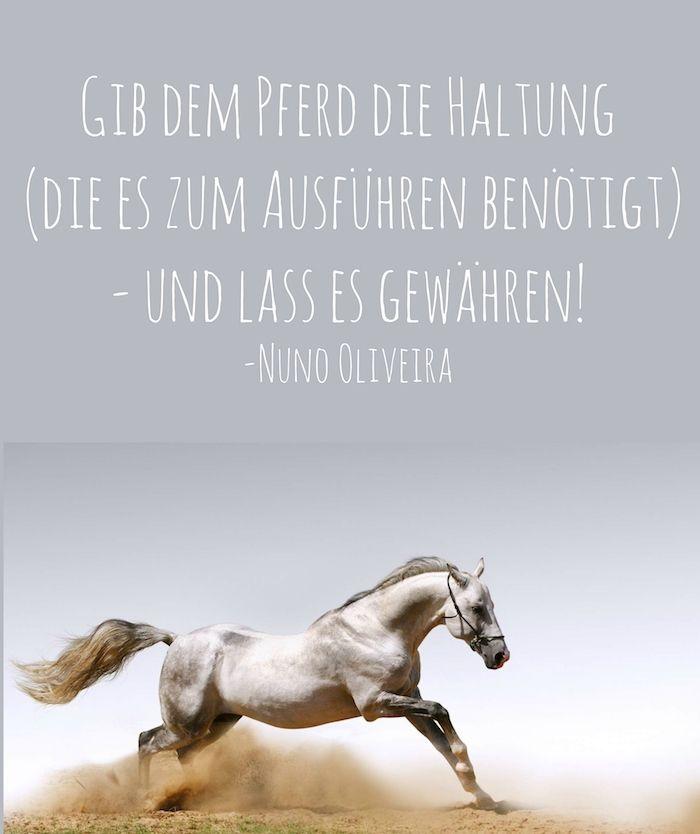 723 besten Reitlehre Bilder auf Pinterest | Pferde, Reiter und ...