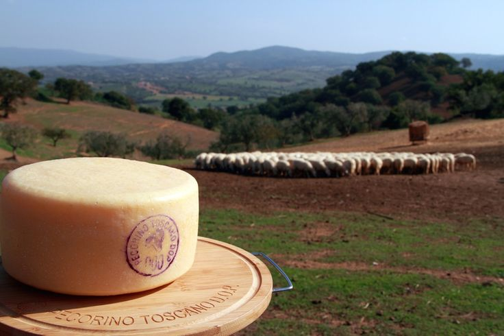 Learn About Pecorino Cheese in Tuscany:Buying, Tasting