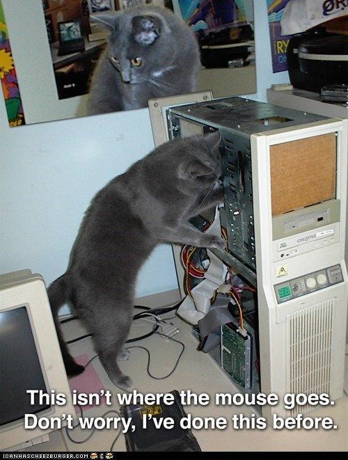 Cat Computer Repair - we always compare the amount of dust and fur we blow out of computers in terms of cats... this is just a whole new meaning...