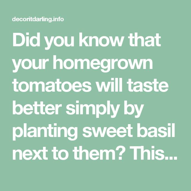 Did you know that your homegrown tomatoes will taste better simply by planting sweet basil next to them? This is just one example of companion planting with herbs. Find more tips in this article. - Decor It Darling