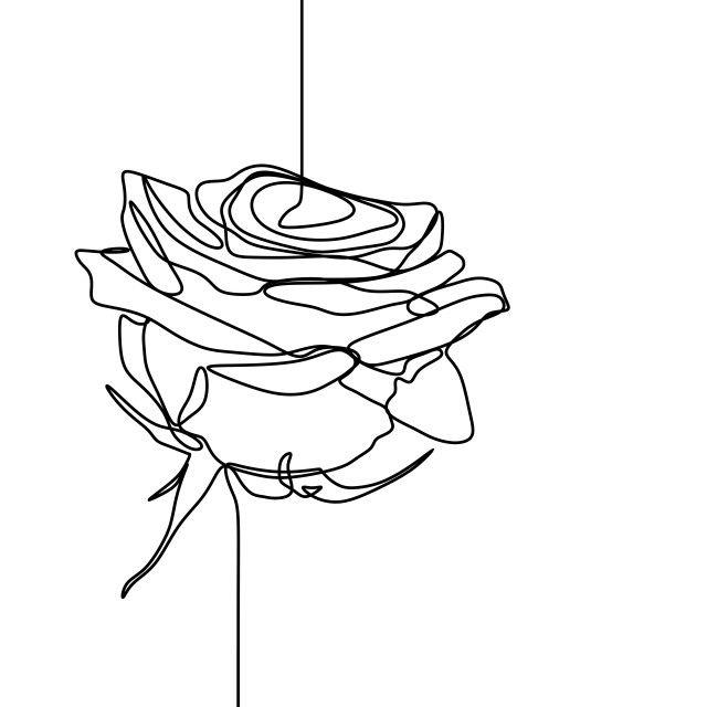 Minimalistic One Line Art Rose Tattoo Rose Line Art Line Art Drawings Rose Illustration
