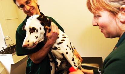 ¡Nuevo curso de ayudante técnico veterinario! cursos ccc http://www.cursosccc.com/a-distancia/curso-ayudante-tecnico-veterinario