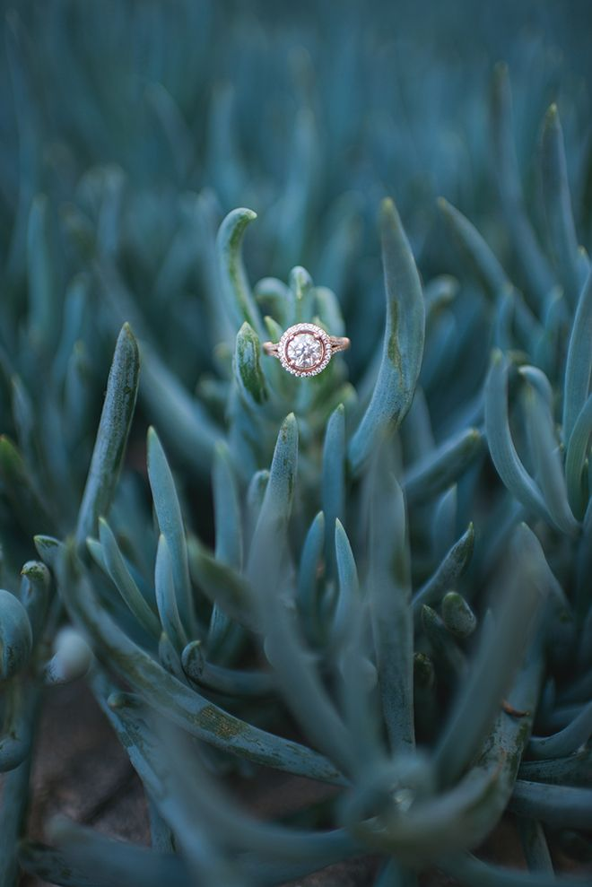 Engagement ring on succulent | Engagement in Santa Monica | Randy + Ashley Photography