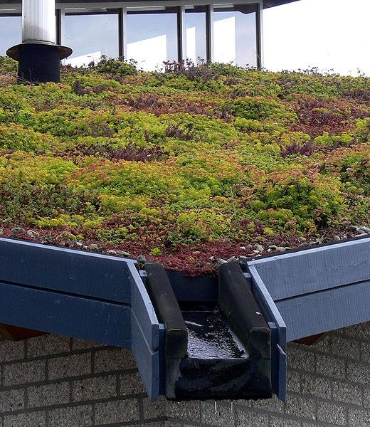 Find This Pin And More On Garden Green Roofs By Aayers324.