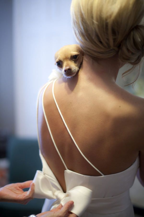 Awww! Pup with her mama, the bride.