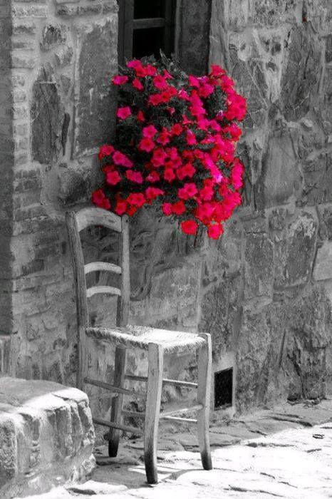 pink flowers,,,color splash,,,