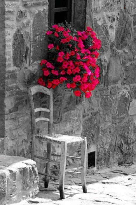 pink flowers,,,color splash,,,
